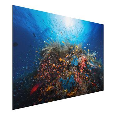 Quadro in alluminio - Lagoon Underwater