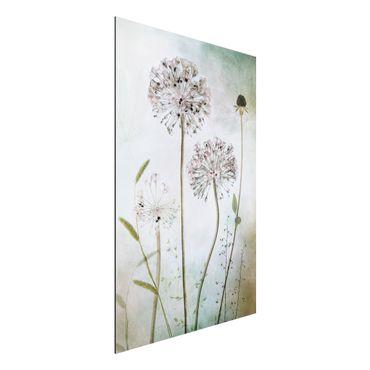 Quadro in alluminio - fiori Allium a pastello