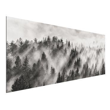 Quadro in alluminio - Raggi Luce nella foresta di conifere