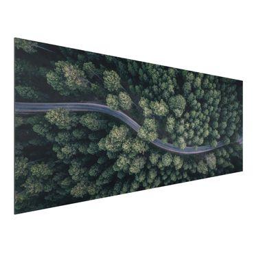 Quadro in alluminio - Veduta aerea - Forest Road From The Top
