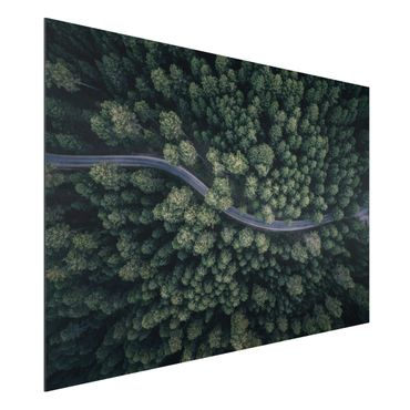 Quadro in alluminio - Veduta aerea - Forest Road From The Top