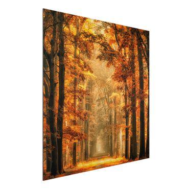 Quadro in alluminio - foresta incantata in autunno