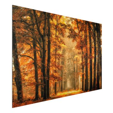 Quadro in alluminio - foresta incantata in autunno