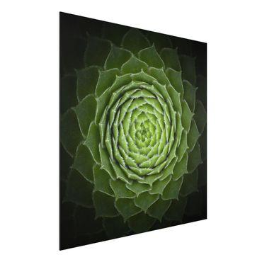 Quadro in alluminio - Mandala Succulente