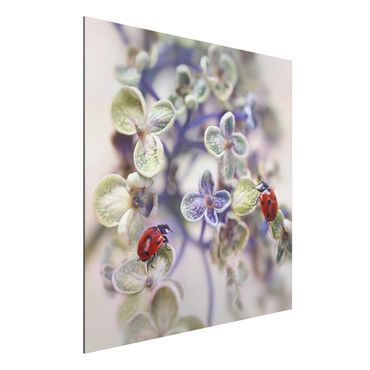 Quadro in alluminio - Ladybug In The Garden