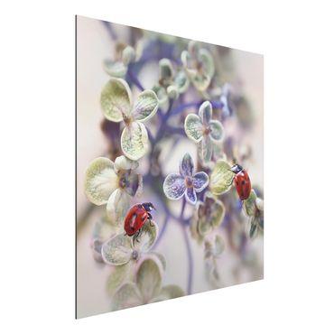 Quadro in alluminio - Ladybug In The Garden