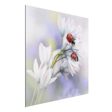 Quadro in alluminio - Ladybugs Couple