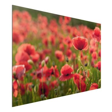 Quadro in alluminio - Poppy Field In Sunlight