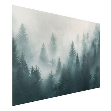 Quadro in alluminio - Coniferous Forest In Fog