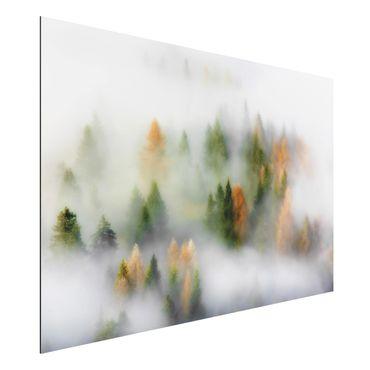 Quadro in alluminio - Nube di foresta in autunno
