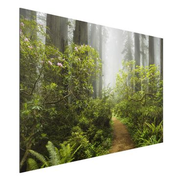Quadro in alluminio - Misty forest path
