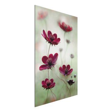 Quadro in alluminio - Pink Kosmeen