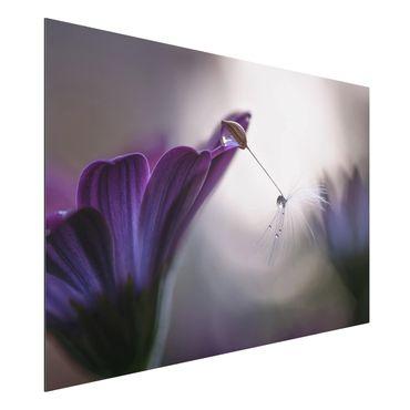 Quadro in alluminio - Purple Rain