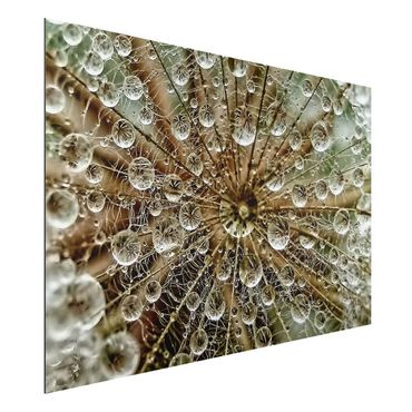 Quadro in alluminio - Dandelion In Autumn