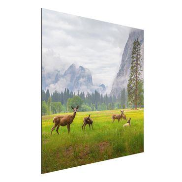 Quadro in alluminio - Deer In The Mountains