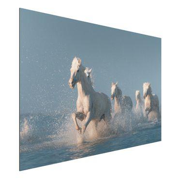 Quadro in alluminio - mandria di cavalli