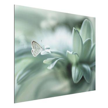Quadro in alluminio - Farfalla E Gocce di rugiada In Pastel Verde