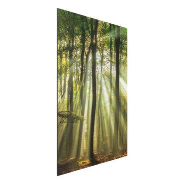 Quadro in alluminio - Sunny Day In The Forest