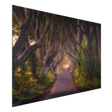 Quadro in alluminio - Tunnel From Trees
