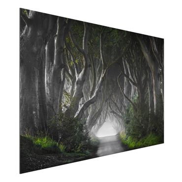 Quadro in alluminio - Forest In Northern Ireland