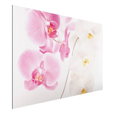 Quadro in alluminio - Delicate Orchids