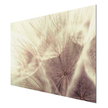 Quadro in alluminio - Detailed dandelions macro shot with vintage blur effect