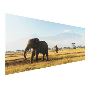 Quadro in alluminio - Elephants in front of the Kilimanjaro in Kenya