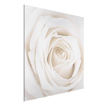 Quadro in alluminio - Pretty White Rose
