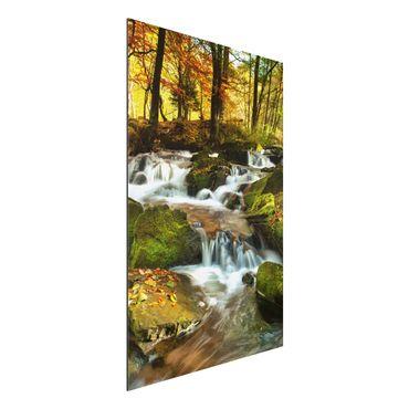 Quadro in alluminio - Waterfall autumnal forest