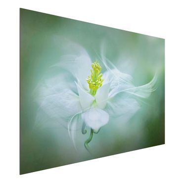 Quadro in alluminio - White Columbine
