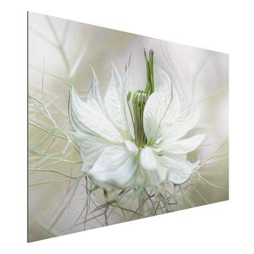 Quadro in alluminio - White Nigella