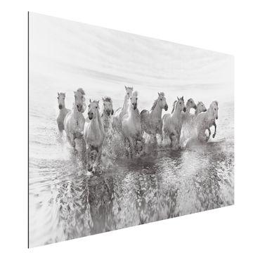 Quadro in alluminio - Cavalli bianchi in mare