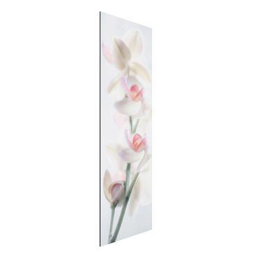Quadro in alluminio - Fragile Orchid