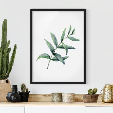 Poster con cornice - Eucalipto in acquerello I