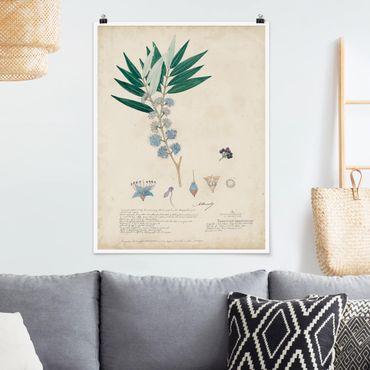 Poster - Melastomataceae - Angustifolium - Verticale 4:3