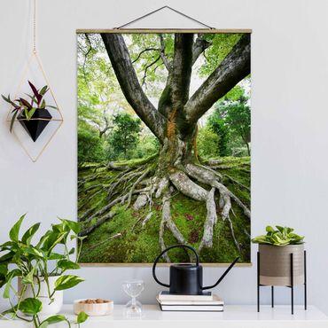 Foto su tessuto da parete con bastone - vecchio albero - Verticale 4:3