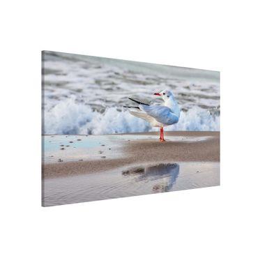 Lavagna magnetica - Gabbiano Sulla Spiaggia Di Fronte Al Mare - Formato orizzontale 3:2
