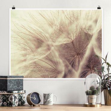 Poster - Dettagliata Dandelion Macro Shot con sfocatura effetto vintage - Orizzontale 3:4