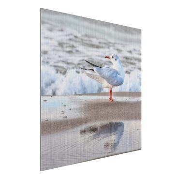 Stampa su alluminio spazzolato - Gabbiano Sulla Spiaggia Di Fronte Al Mare - Quadrato 1:1