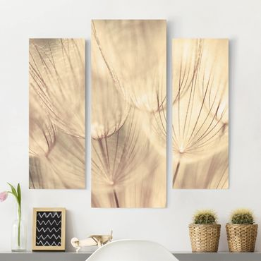 Stampa su tela 3 parti - Dandelions Close-Up In Sepia Tones Homely - Trittico da galleria