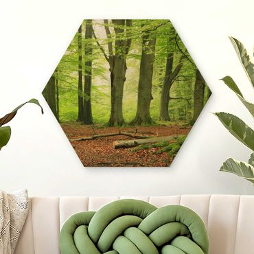 Esagono in legno - Mighty Beech Trees