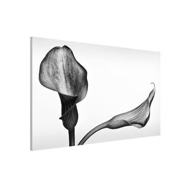 Lavagna magnetica - Calla Close-up Bianco e nero - Formato orizzontale 3:2