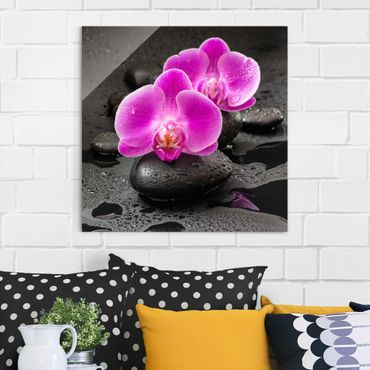 Quadro in vetro - Pink Orchid Fiori Sulle Pietre Con Le Gocce - Quadrato 1:1
