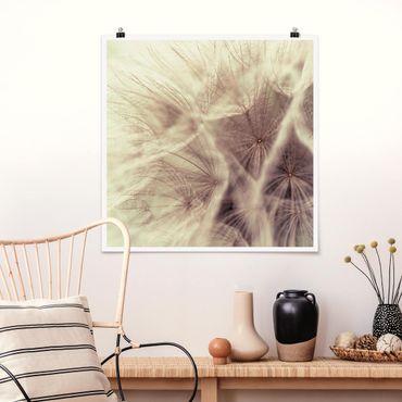 Poster - Dettagliata Dandelion Macro Shot con sfocatura effetto vintage - Quadrato 1:1