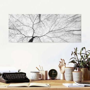 Quadro in vetro - Chiome degli alberi in cielo