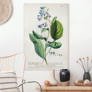 Stampa su tela - Vintage botanica Lungwort - Verticale 3:2