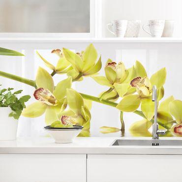 Rivestimento cucina - Elegante orchidea sull'acquas