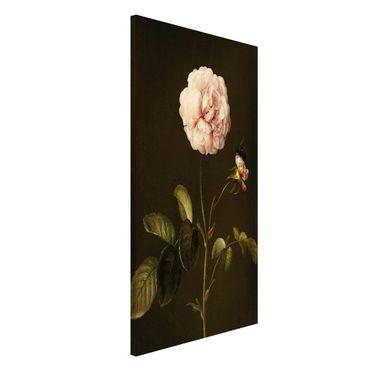 Lavagna magnetica - Barbara Regina Dietzsch - Rosa Gallica Con Bumblebee - Formato verticale 4:3