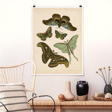 Poster - Vintage Illustrazione di farfalle esotiche II - Verticale 4:3