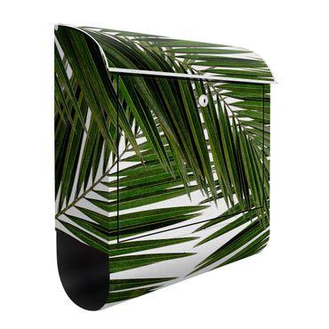 Cassetta postale - Scorcio tra foglie di palme verdi